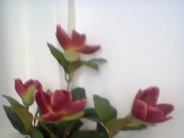 Kwiatki odemnie - Kwiatki po prostu kwiatki