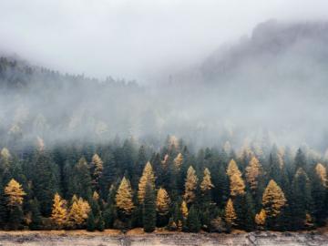 Magie de la forêt - Paysage rempli d'arbres. Les arbres en vert, jaune et brun, vous pouvez voir un morceau d'