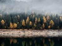 Forest Magic - Krajina plná stromů. Zelené, žluté a hnědé stromy, kousek vody.