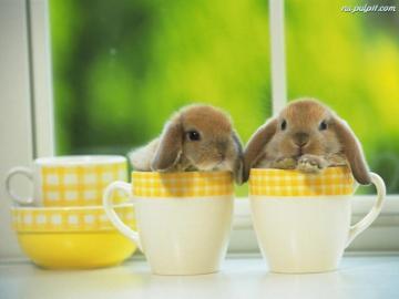 coniglietti - due fiocchi di neve saltano fuori dalle tazze