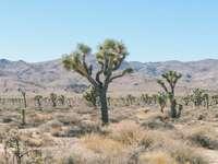 Vederi de deșert - În imagine vegetația deșertului și a deșertului. O suprafață cu o suprafață considerabilă,