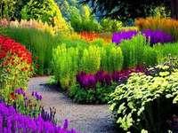 kolofrowy ogród