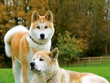 Haagský Sibiř - velmi obtížné hádanky zajišťují skákání psů a společnou zábavu