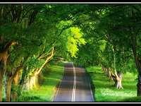 горска пътека