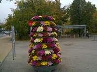 Blumenbeet - Städtischer Markt in Legionowo