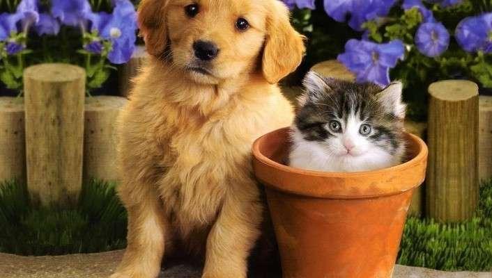 кучета пъзел - пъзел, изобразяващ куче и котка (3×3)