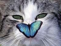 kočka a motýl