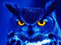 Zoo - quite difficult puzzle - owl
