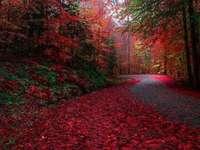 zlatý podzim - podzimní lesní cesta lesem