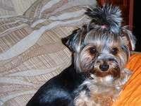 amico - bel cane pettinato