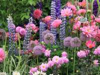 mycket rosa blommor