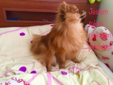 Little bobo dog - Arrange the bobo frodo quickly