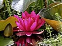 cd flores