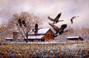 Wild gesi - Passage of wild geese over snow-capped countryside