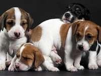 pessoas - filhotes de cachorro abraçados