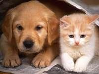 Cachorro com um gato
