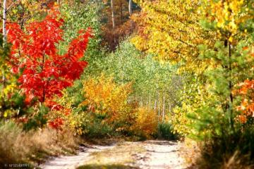 beautiful autumn - shrubs, trees, colors