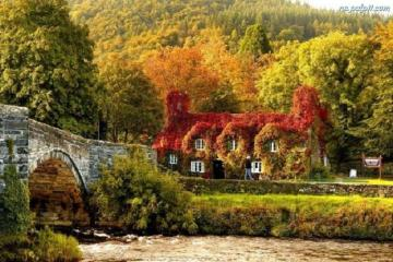 autumn house - house, leaves, autumn, bridge