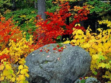 autumn stone - stone, leaves, plants, colors