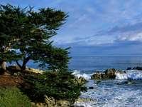 drzewo nad zatoczką