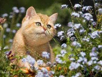 kochane zwierzęta - kotek wśród kwiatków