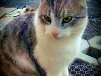 amigo gato