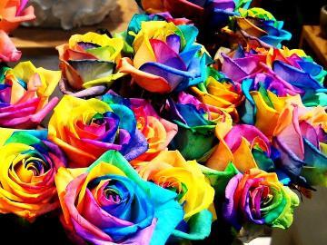 Couleurs fantaisie de roses - Couleurs fantaisie de roses