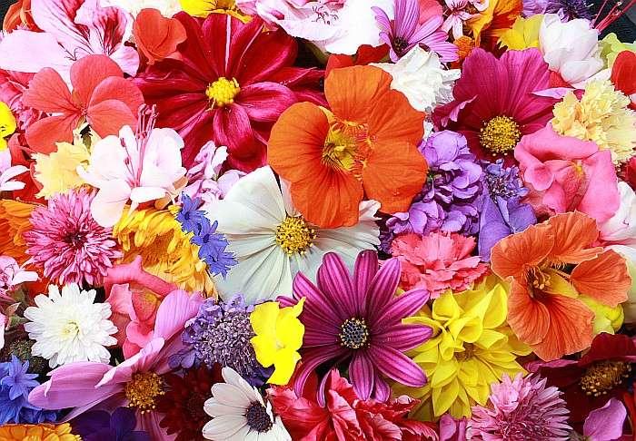 Pęk kolorowych kwiatów (10×10)