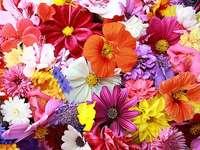 Een bos van kleurrijke bloemen