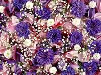 Foto de flores coloridas - Foto de flores coloridas