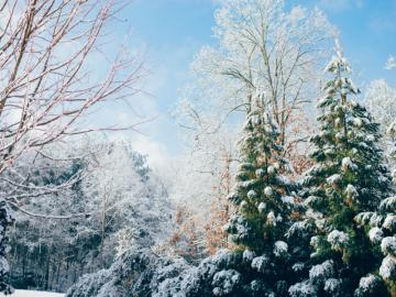 winter views - Christmas is associated with the first star, Christmas tree, Christmas gingerbread, a tablecloth, a