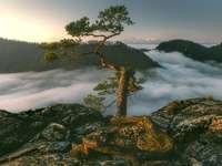 Ceata care cade - peisaj colorat peste ceață