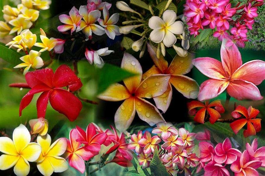 Graficzna kompozycja kwiatowa (10×10)