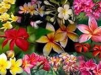 Graficzna kompozycja kwiatowa
