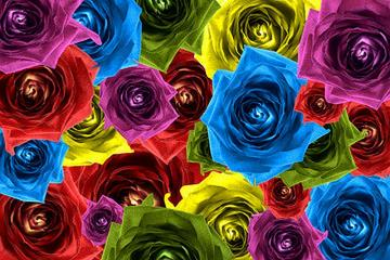 Rose composition,Colorful flo - Rose composition.Colorful flowers.