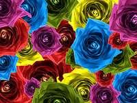 Compoziție trandafir, floare colorată - Compoziție colorată trandafir