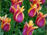 colorful flowers - nice flowers in spring. Colorful flowers.