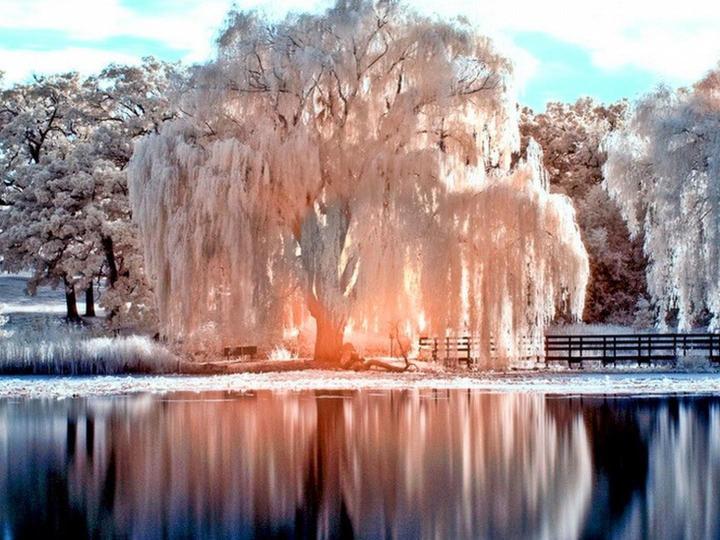 Зима и светлина - Зимен парк със светло езерце (7×7)