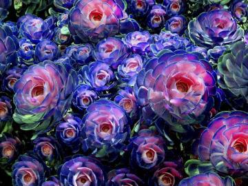 Fleurs graphiques-colorées