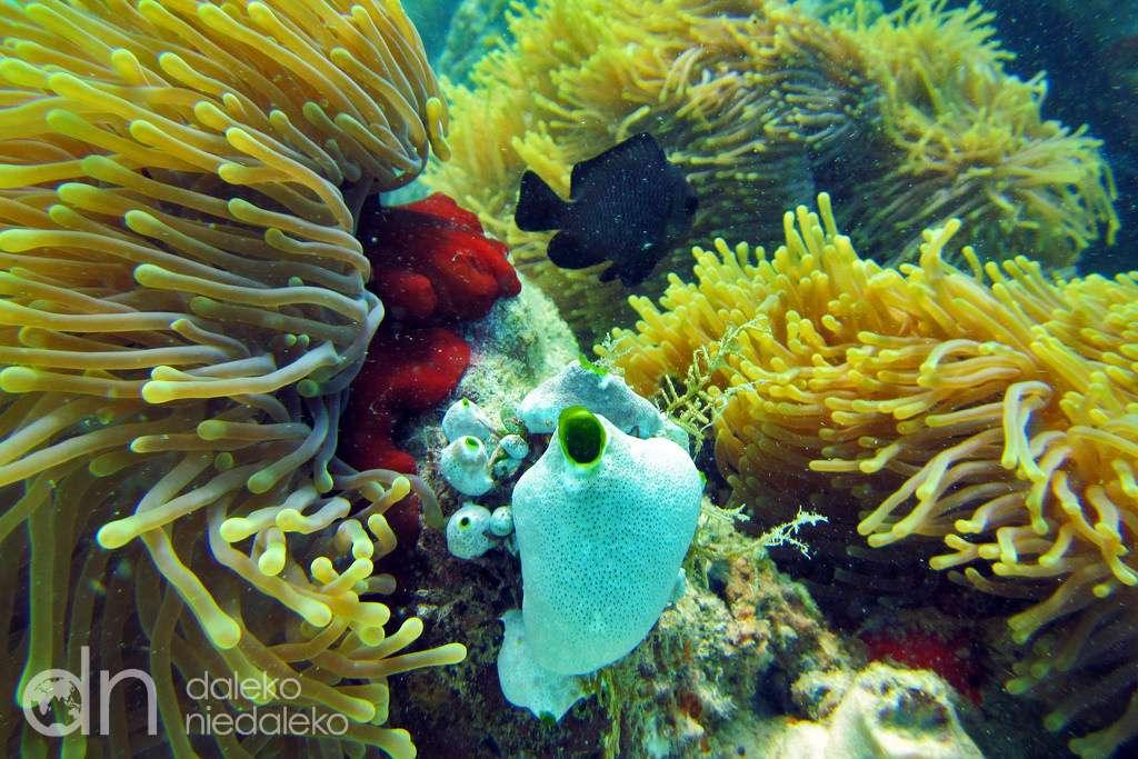 Κοραλλιογενής ύφαλος στην Κένυα παζλ