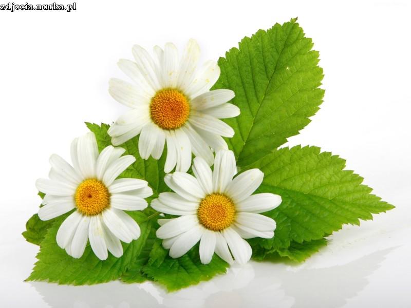 bloemen - de natuur zelf