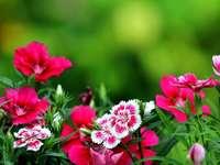 Λουλούδια, λουλούδια - Λουλούδια, λουλούδια