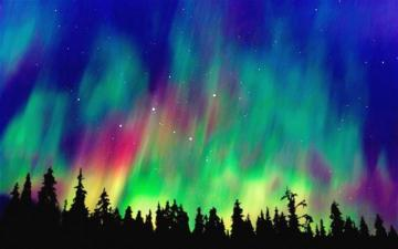 colorful aurora - aurora, colors, forest, night