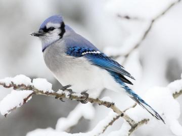 lovely animals - bird on a snowy branch
