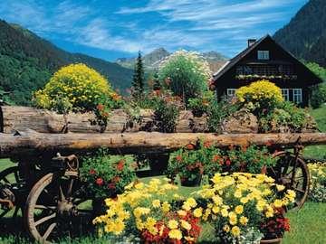 Alpine flowers - Alpine flowers