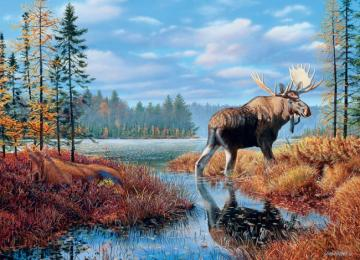 A moose on the swamp - Moose on the swamp ....
