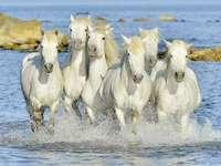 Pędzące konie