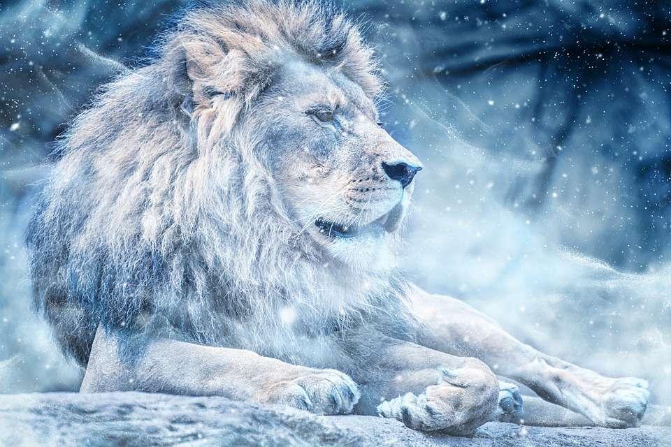 zwierzaki i zwierzaczki - zwierzęta piękne i jeszcze piękniejsze (8×8)