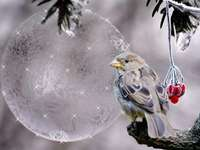 Prachtige kerst - Vakantie - de mooiste tijd