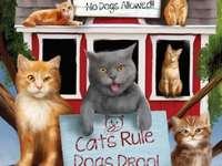 Котка, коте и коте